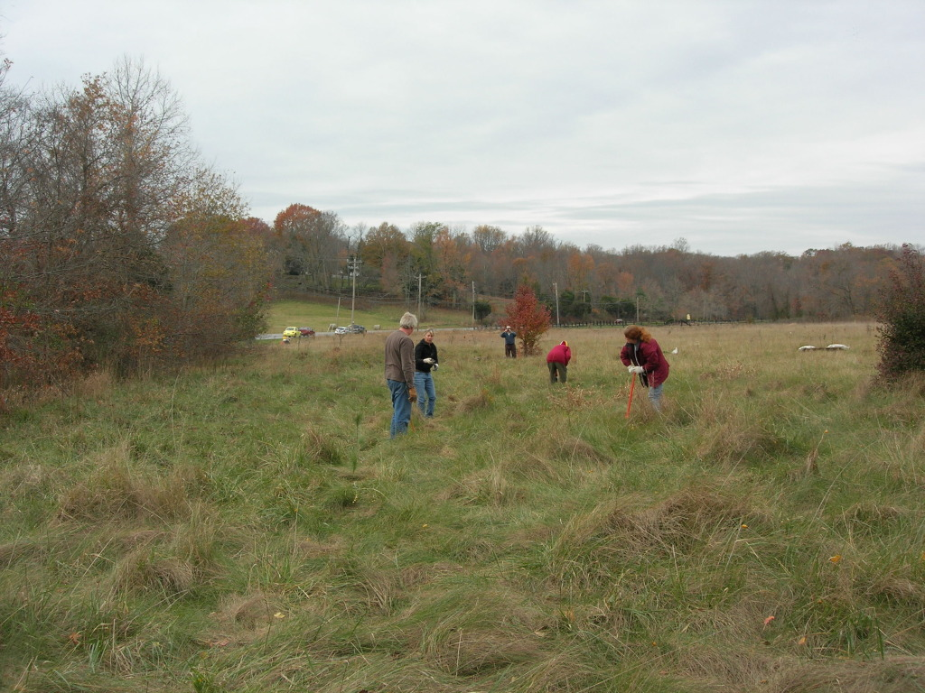 Volunteers planting trees along Port Tobacco River