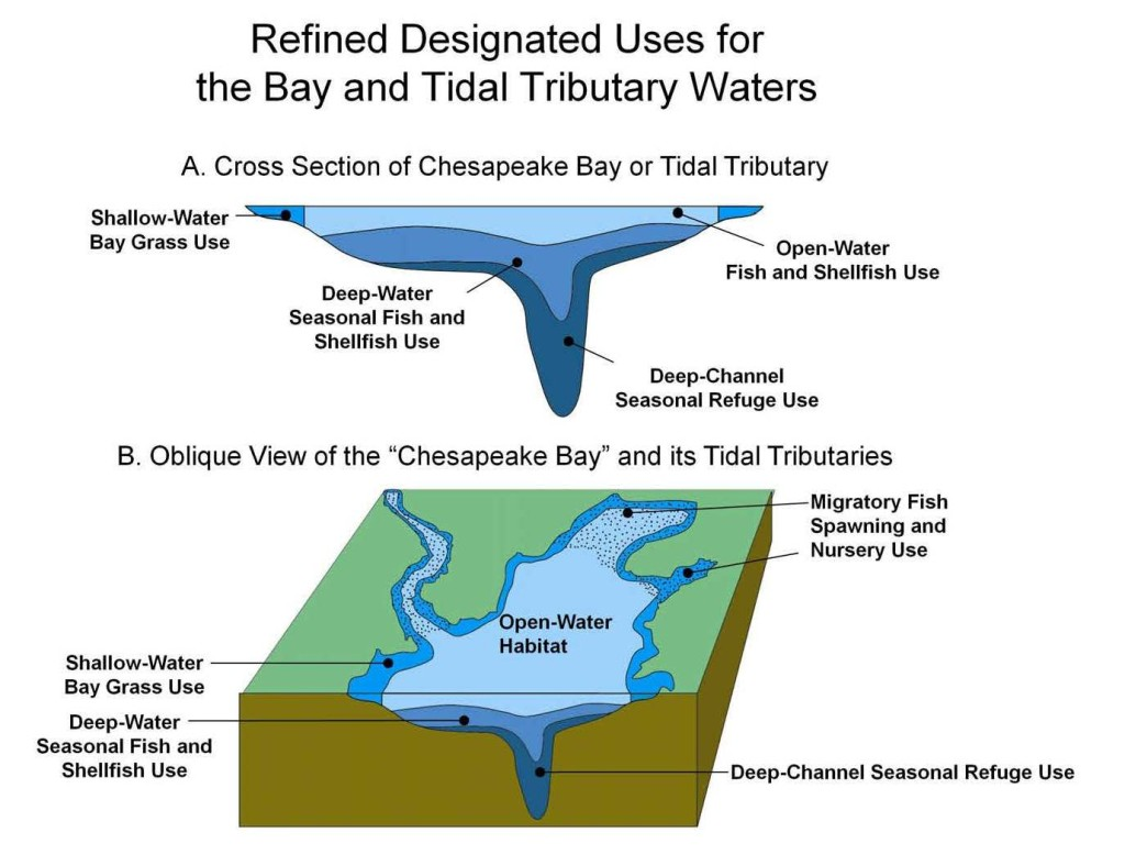 Designated Uses for Bay Tidal Waters
