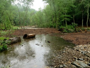 Church Creek after restoration