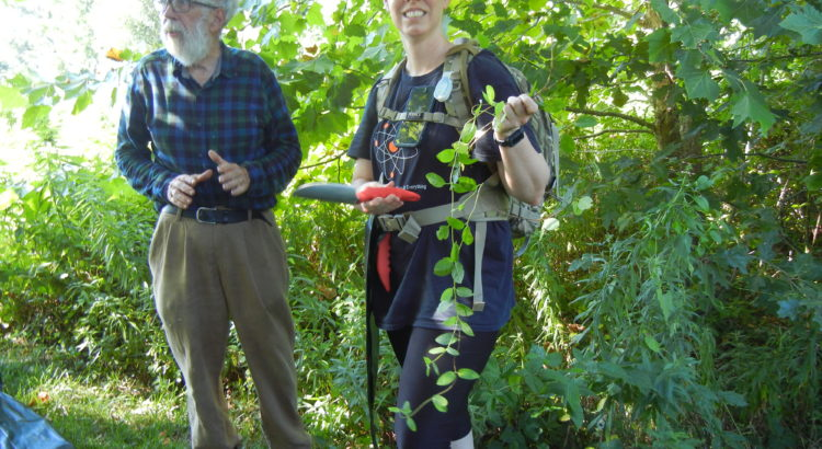 Volunteers removing Invasive Plants